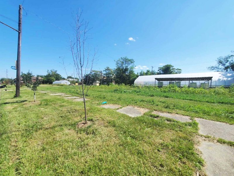 A grassy field with a small, bare tree in the foreground and large hooped greenhouse enclosures in the background.